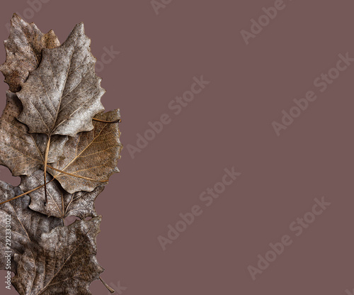 Photo Stands Roe REE LEAVES ON brown BACKGROUND FOR DESKTOP FUND. FALL