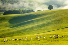 A Herd Of Grazing Sheep On A Meadow In The Foreground Of A Foggy Landscape In The Autumn Morning. The Orava Region Near The Village Of Zazriva In Slovakia, Europe.