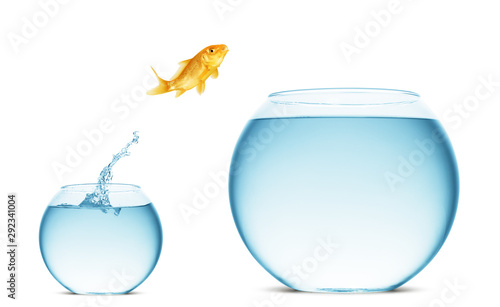 Photo goldfish jumping out of the water