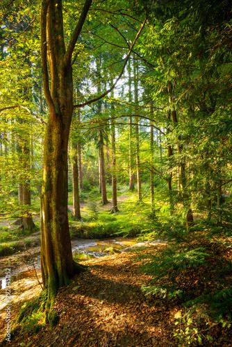 Schöner Platz im Wald mit Baum, kleinem Bach und viel Sonnenlicht im Hintergrund Canvas-taulu