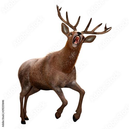 Poster Cerf 3D Rendering Male Deer on White