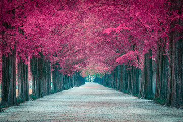 Pink tree tunnel in in Sout...