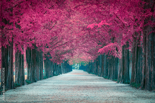 Poster Crimson Pink tree tunnel in in South Korea