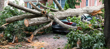 Tree Lands On Car During Storm On Long Island