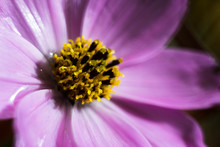 Purple Flower With A Yellow Center