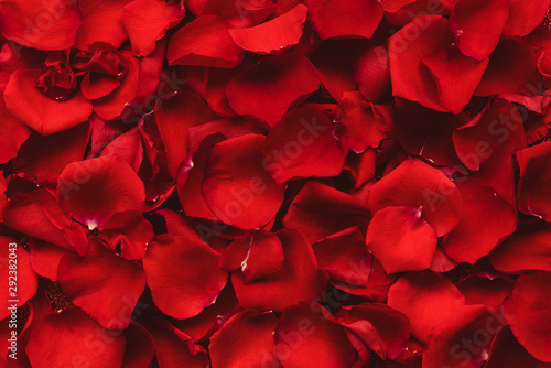 obraz PCV Background of red rose petals. Valentines day celebration concept. Top view. Flat lay.