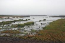 Marschlandschaft Und Salzwiesen