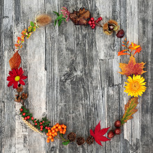 Autumn Harvest Wreath Abstract Composition With A Variety Of Natural Flora And Food On Rustic Wood Background. Harvest Festival Theme.