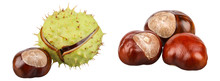 A Group Of Ripe Chestnuts And Chestnut In A Bursted Peel. Isolated Picture.