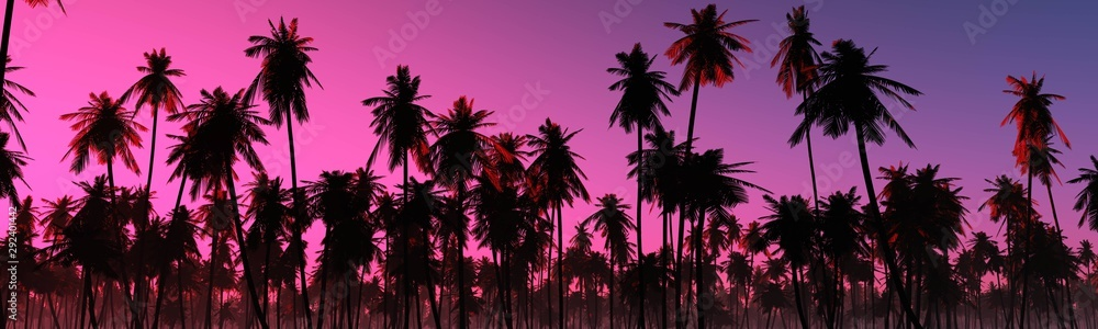 Fototapety, obrazy: Beautiful palm trees against the sunset sky.