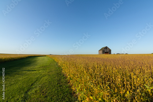 Midwest farmland Wallpaper Mural