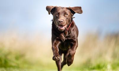 FototapetaPortrait of a happy dog