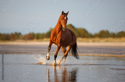 Fototapeta horse on the beach obraz