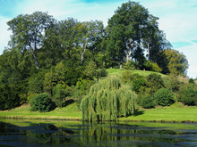 Weeping Willow And Other Trees On A Hillside Beside A Lake In A Country Park In North Yorkshire, England