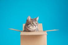 Cute Grey Tabby Cat Sitting In...