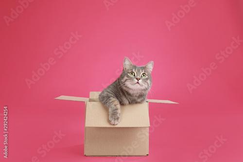 Obraz Cute grey tabby cat sitting in cardboard box on pink background - fototapety do salonu