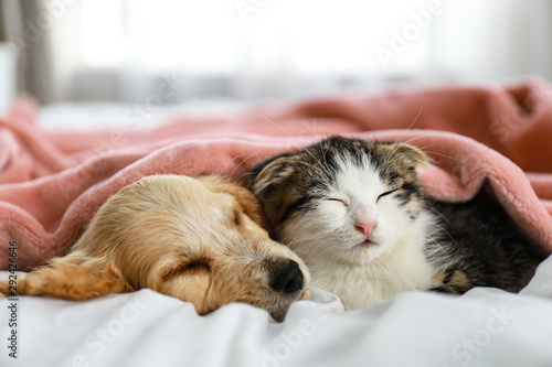 Photo  Adorable little kitten and puppy sleeping on bed indoors