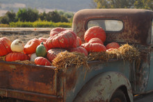 Old Rusty Truck Full Of Fall Pumpkins