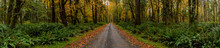 Dirt Road In Rain Forest Pano