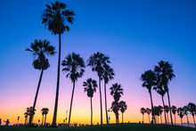 Venice Beach Palm Trees At Sun...