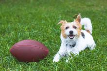 Active Happy Parson Terrier Pu...