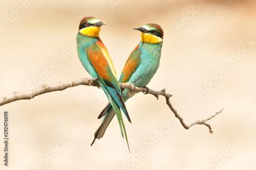 Cadres-photo bureau Oiseau Gruccione