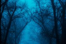 Photo Of A Mystical Fantasy Fo...