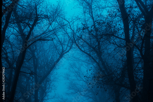 Canvastavla Photo of a mystical fantasy forest, silhouettes of trunks and branches, fog and