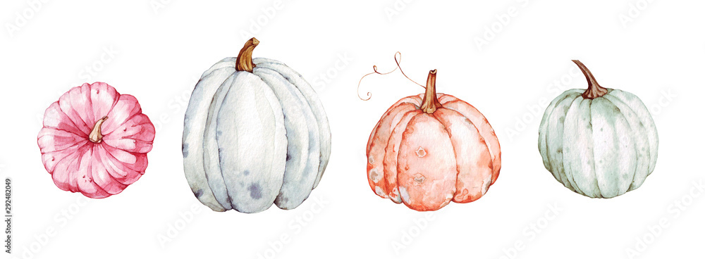 Fototapeta Beautiful pumpkins on isolated white background. Autumn set of elements on isolated white background. Watercolor illustration. Hand drawing. It is perfect for thanksgiving cards or posters, halloween