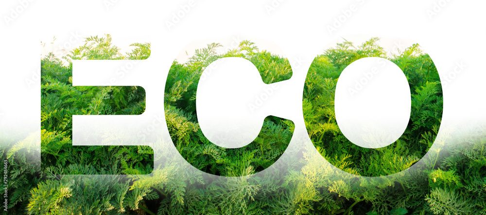 Fototapeta Eco word on the background of green leaves of carrots. plantation. Agriculture. harvest. Environmentally friendly, climate change, quality control, use safe pesticides. Organic vegetables.