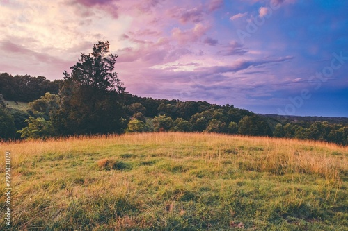 Fototapeta Beautiful shot of a dry grassy field with trees in the distance under a blue sky