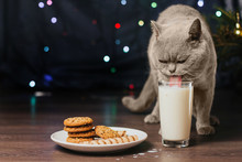 Gray Cat Drinks Milk From A G...