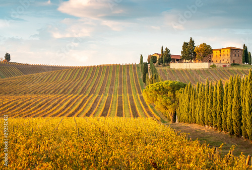 Foto  Golden vineyards in autumn at sunset, Chianti Region, Tuscany, Italy