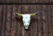 Cow Skull On The Wood Wall Of A Cabin As A Trophy In Feichten (Austria, Tyrol Region)