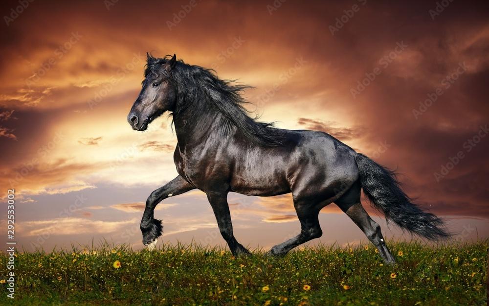 Fototapeta horse