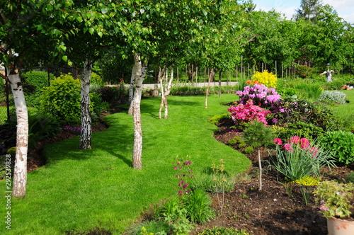 Zagajnik brzozowy w ogrodzie - 292539828