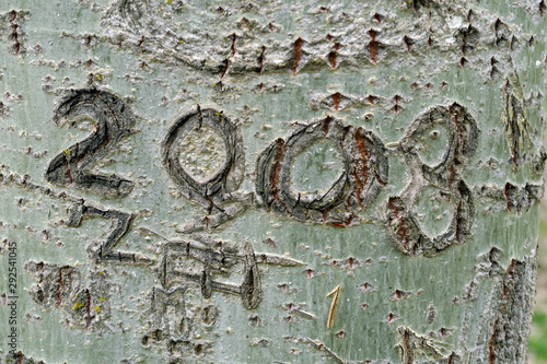 Photo 2003 gravé sur un tronc d'arbre.