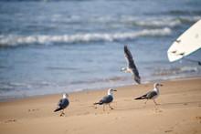 A Seagull Sitting On A Beach S...
