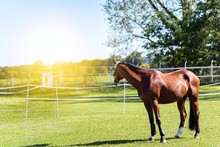 Education Of Horses . Sports H...
