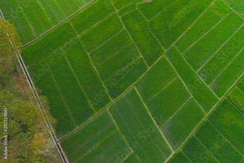 Recess Fitting Green Aerial top view of Paddy rice, agricultural fields in countryside or rural area of Bali, mountain hills valley at sunset on summer in South East Asia, Indonesia. Nature landscape background.