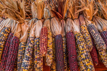 Indian Corn For Autumn Decorat...