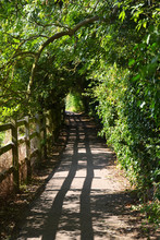 Rural Path From Cambridge To Grantchester