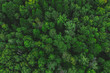 Leinwanddruck Bild - Aerial view of the beautiful green forest. Forest texture top view