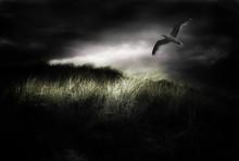 Seagull Flies In Stormy Sky