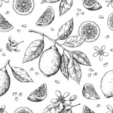 Hand Drawn Lemon Pattern. Vintage Seamless Texture For Juice Label, Citrus Ink Sketch. Vector Illustrations Orange Lemon Lime Fruit Summer Pattern With Leaves And Branch For Wrapping Print