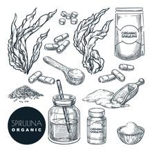 Spirulina Seaweeds Set, Sketch...
