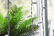 Plant Home Fern On The Windows...