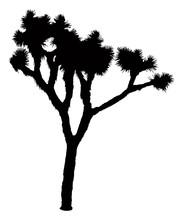 Joshua Tree Silhouette | Vecto...