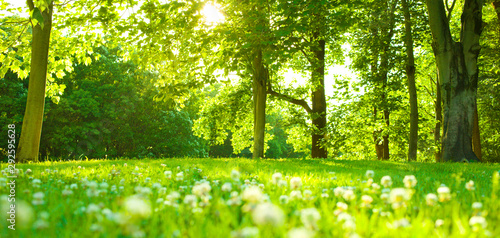 Fototapeta Forest flowers in the morning