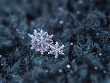 Snowflake Beautiful On The Grey Winter Background